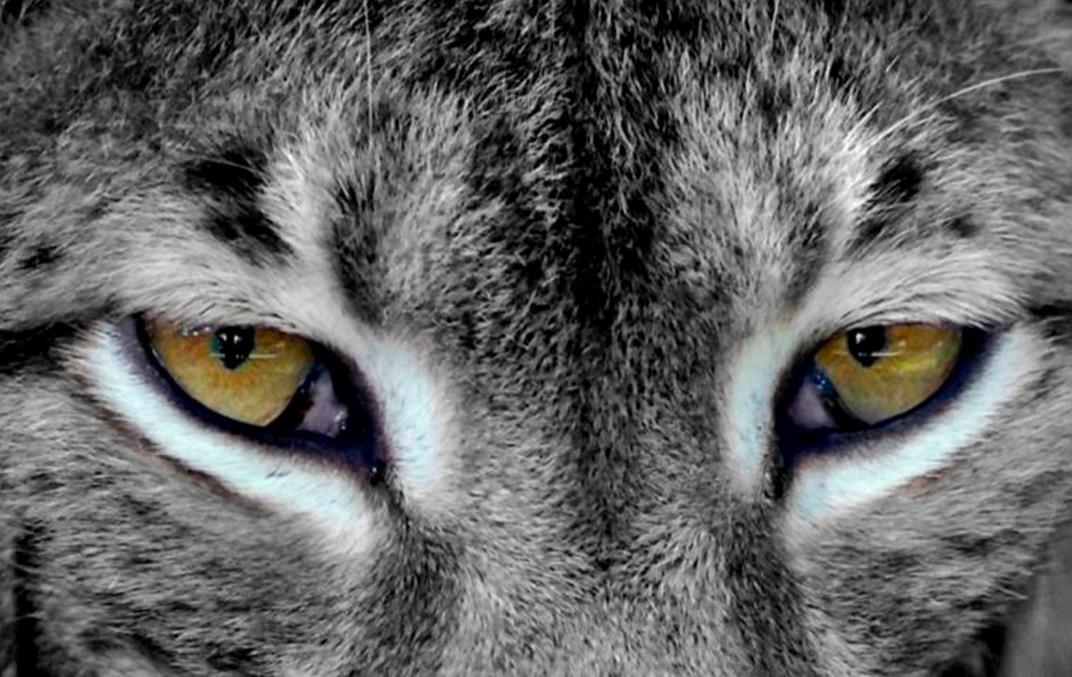 Olhos de lince: é preciso enxergar o que ninguém vê!