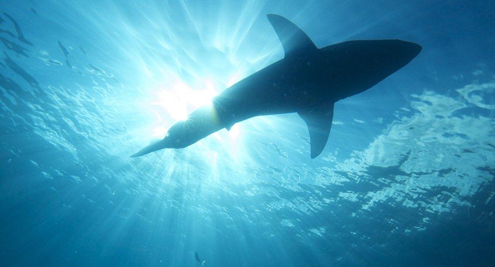 Tubarões congelados aparecem na costa dos EUA devido às temperaturas baixas