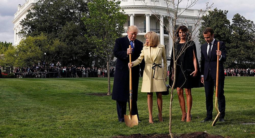 Árvore plantada por Macron e Trump some do jardim da Casa Branca