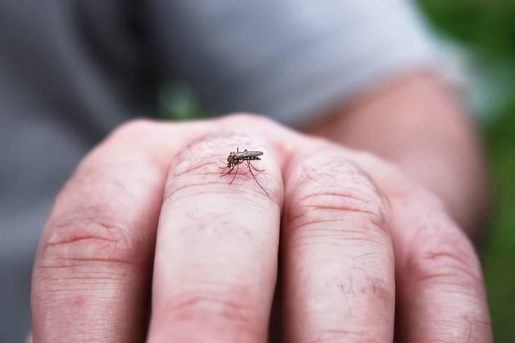 Autoridades alertam sobre contaminação do virus EEE por mosquito