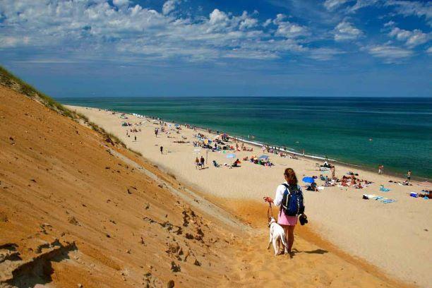 White-Crest-Beach-Dog